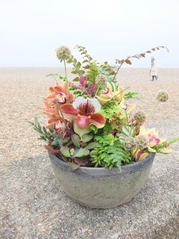 cement bowls and seaside succulents